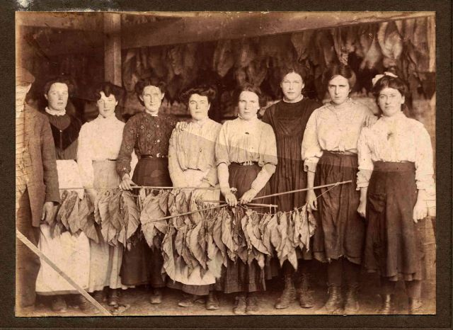 tobacco workers